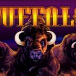 Buffalo Slot Vlt